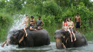 Chitwan Jungle Safari Wildlife Tour - 2 Night 3 Days