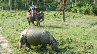Chitwan Jungle Wildlife Tour